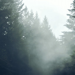 freetoedit photography perspectives fog nature