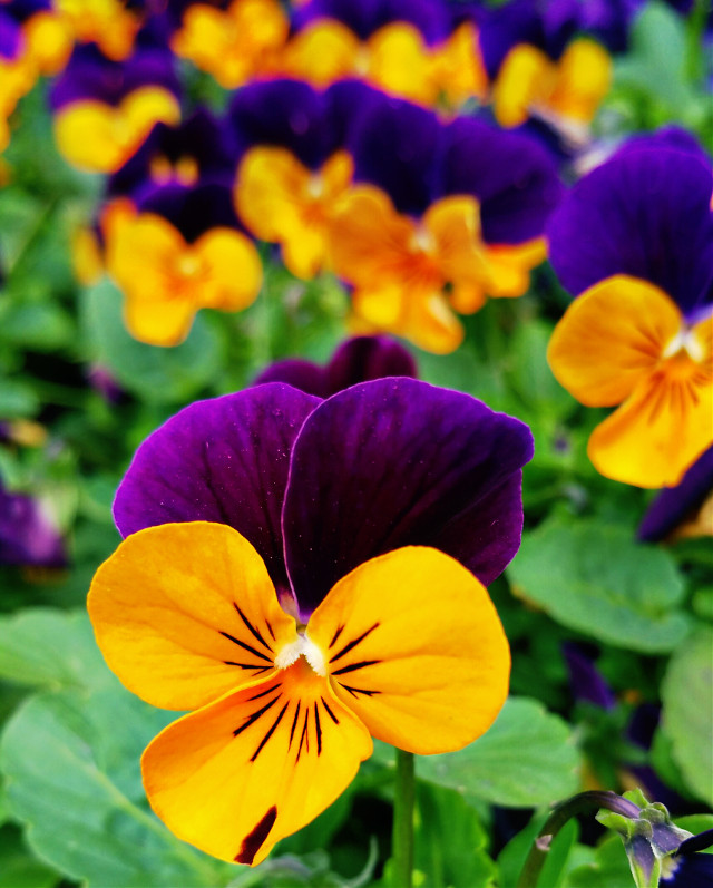 #vibrant #flower #colorful #nature #photography #love #spring #wppflowers