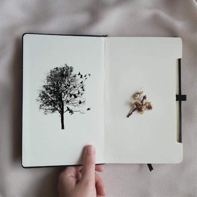 #FreeToEdit #art #walkinthewoods #vscocam #vsco #vscogood #edit       #edited #madewithpicsart #photography #minimal #minimalism #minimalist #follow #followme #picsart