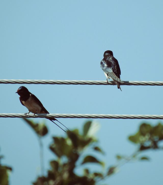Happy weekend , my friends! #birds