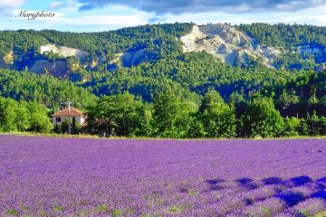 wppflowers france photography provence landscape