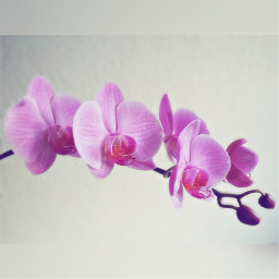wppflowers blooming orchid colorful petals