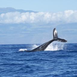 freetoedit showmethesea sea dolphins swim