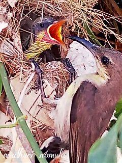 photography petsandanimals love colorful bird