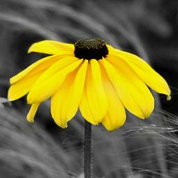 quotes flower nature colorsplash blackandwhite