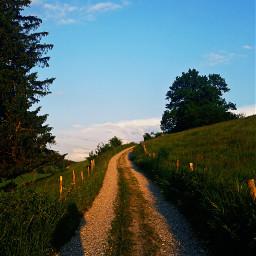 wpphike hike germany bavaria trees freetoedit