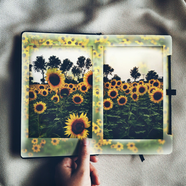 Op:- Remix Galleries #remixme #remix #edited #sunflowers #madewithpicsart #doubleexposure
