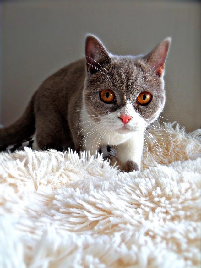 #interesting #france #photography #cat #eye #beautiful #amazing #cute #portrait #pets&animals #petsandanimals #animals #photo de #hdr #freetoedit #wppwhite #pcmypets #mypets #pcmylife #mylife #pcpetsofpa