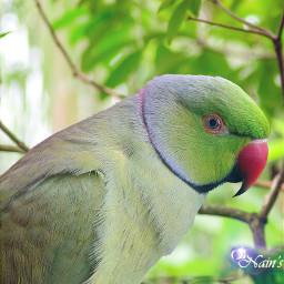 green parrot parrots nature naturephotography