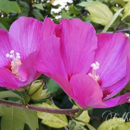 macro nature flower pink summer
