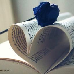 semplicity favourite shot bluerose book freetoedit