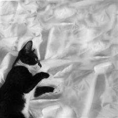 freetoedit blackandwhite photography petsandanimals cute