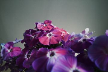 flower nature love photography color freetoedit