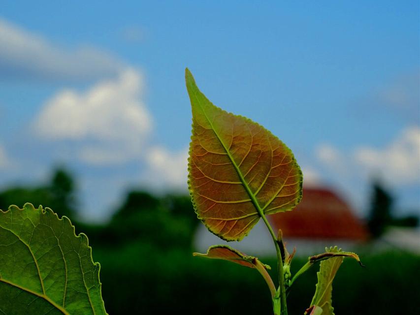 #nature #leaf