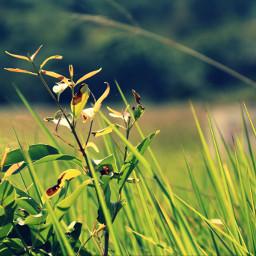 landscape_captures