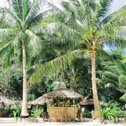 findyourspot beach palmtrees philippines freetoedit
