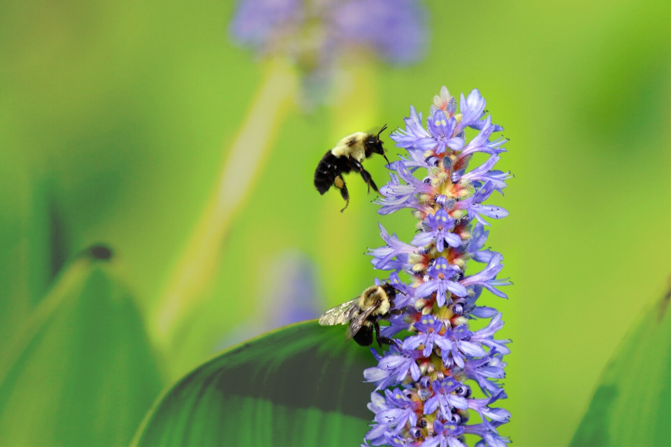 #filmbackground #nettesdailyinspiration #bees #flowers #nature #green #purple #july #summer