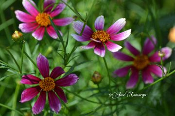 flower nature photography colorful summer