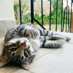 freetoedit cat animal friday humor