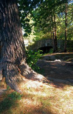 elizabethpark garden tree bridge