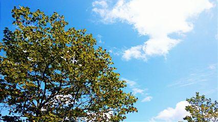 sky trees crispeffect