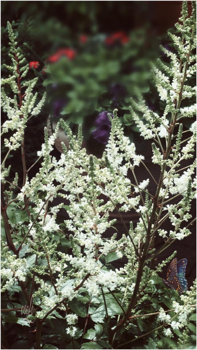 Good evening dear friends❤ #flowers #garden #photography  #@csefi #mygardenflower