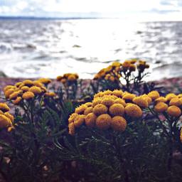 nature flowers sea