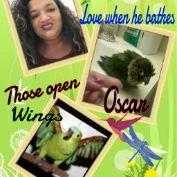 believe fly oscar spreadyourmirawings flyhigh