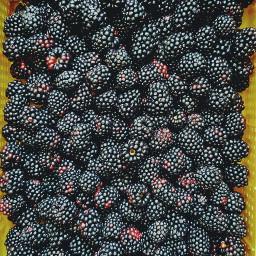 freetoedit blackberrie