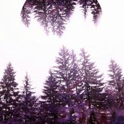 tree purple creative nature alternative