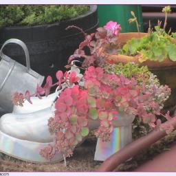 photography nature flora platformshoes plantpots