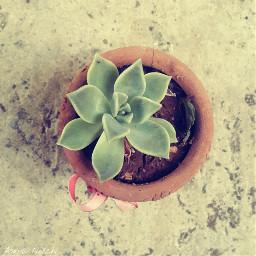 flower simple beautiful gardenflower greenflower freetoedit