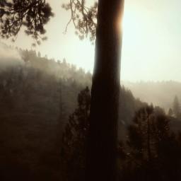 freetoedit idaho forestfire smokey