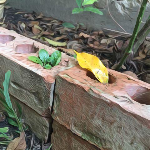 #oileffect,#leafs
