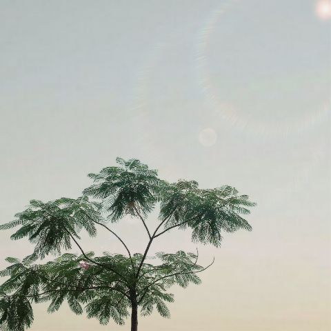 #freetoedit,#tree,#sunny,#simple