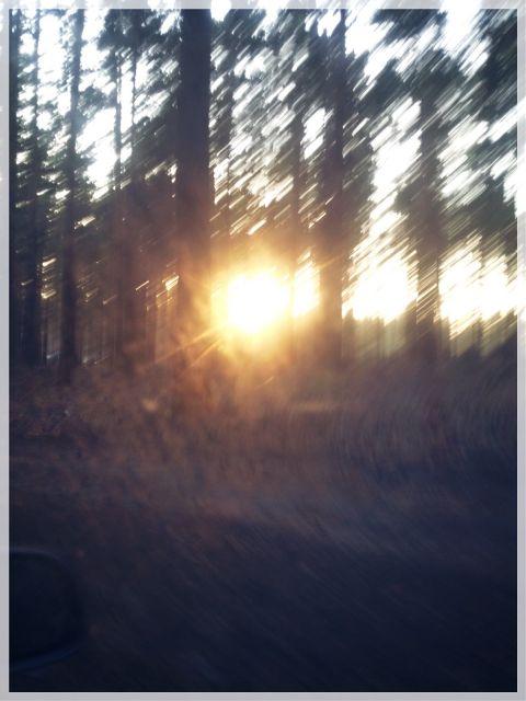 #freetoedit,#sunset,#forest,#grass,#beautiful