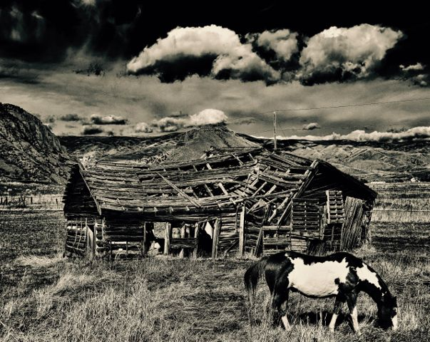 #nature,#landscape,#vintage,#shed,#horse,#freetoedit